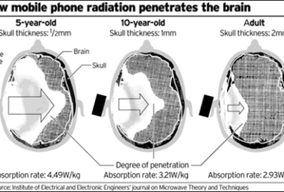 EMFs/Cell Radiation on Brain